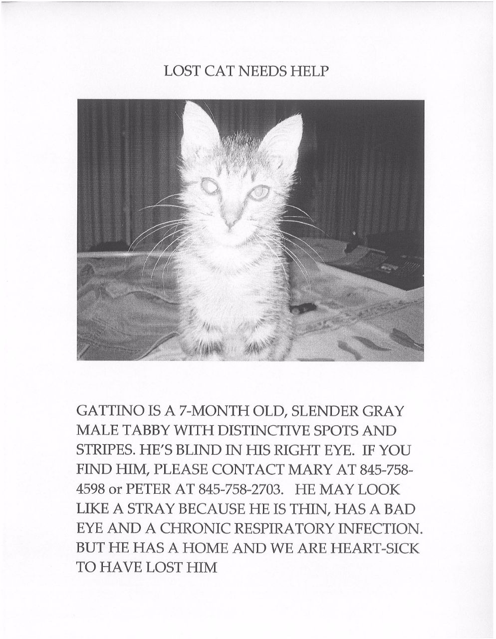 022 Mary Gaitskill Lost Cat Int Essay Example Why Should We Love Staggering Animals I Full
