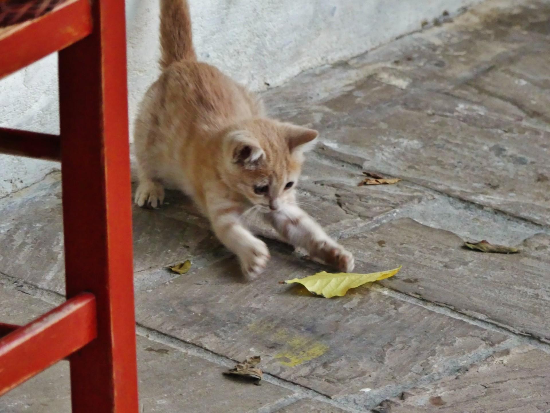 024 P1010749 Pet Animal Cat Essay Dreaded My Favorite In English Tamil 1920