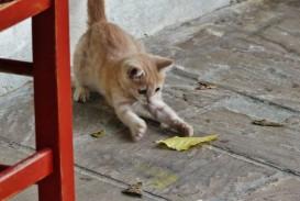 024 P1010749 Pet Animal Cat Essay Dreaded My Favorite In English Tamil