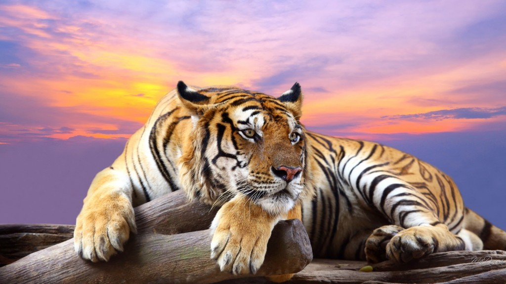 025 Tiger Essay Example Astounding On Shroff Hindi For Class 1 National Animal In Large