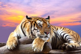 025 Tiger Essay Example Astounding On Shroff Hindi For Class 1 National Animal In